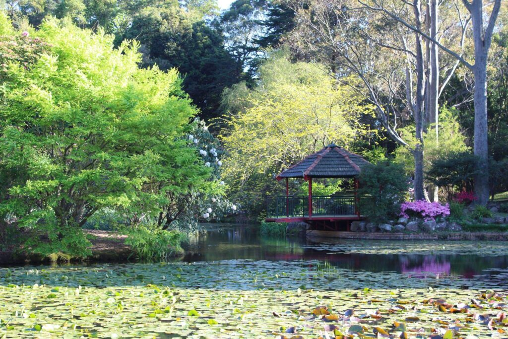 The Illawarra Rhododendron Park is the perfect spot for a picnic on a sunny day.
