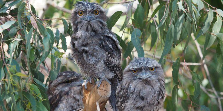 the fold illawarra nocturnal wildlife walk 768x384