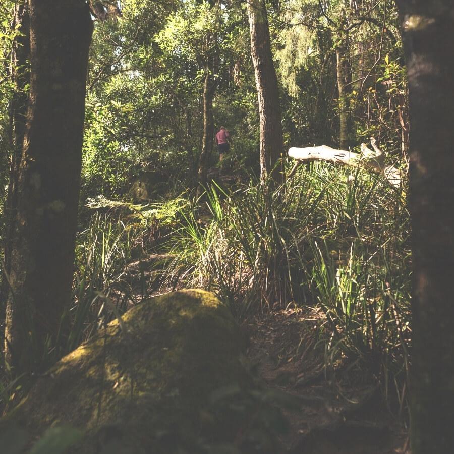 Drawing Room Rocks bushwalks near Berry NSW