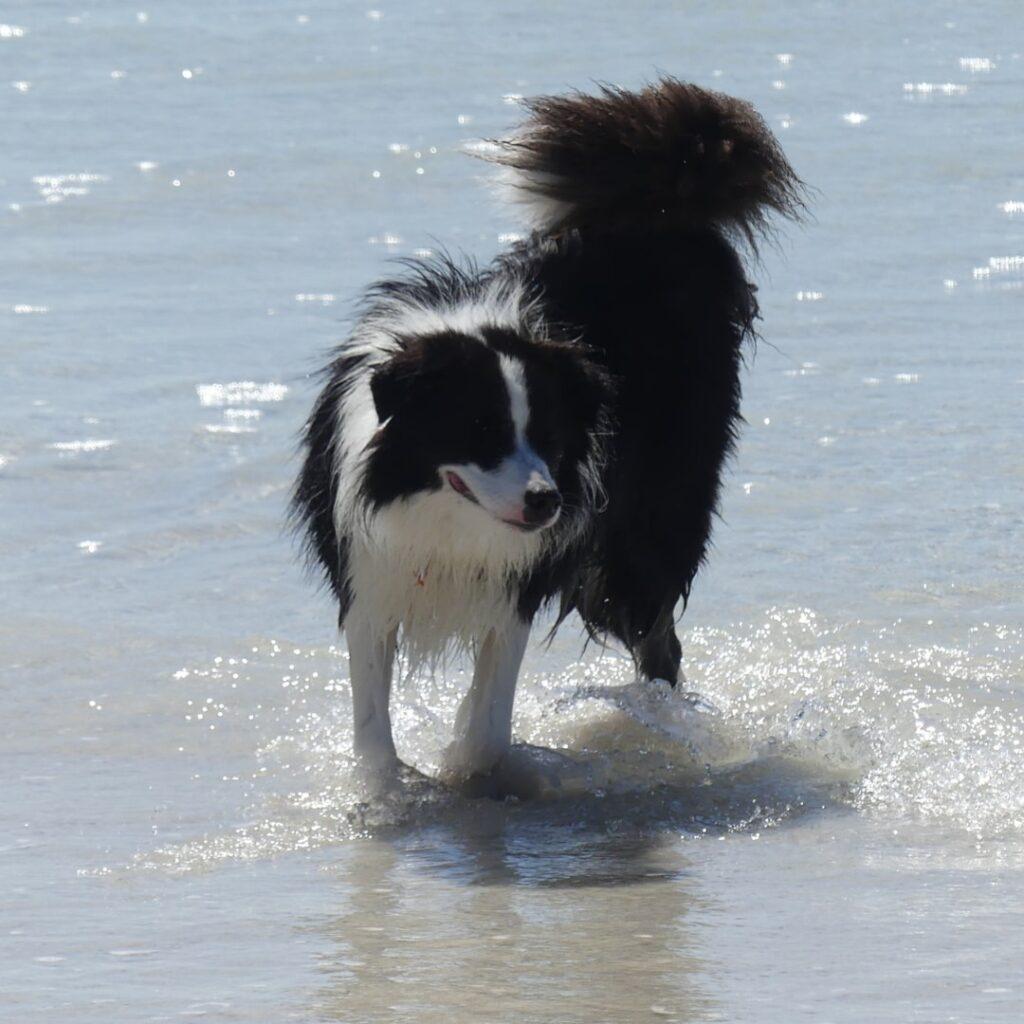 Dog-friendly Beaches in Wollongong, Illawarra