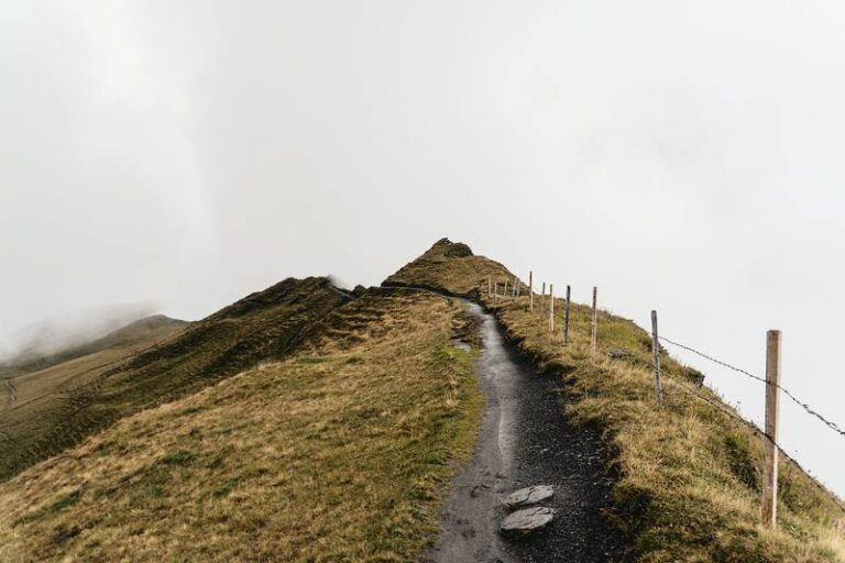 the fold illawarra nature and photography walk meetup 768x512